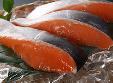 北海道産最高級活〆「時鮭」