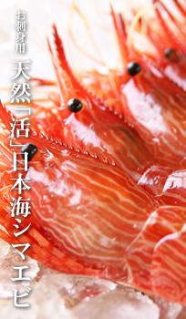 活日本海シマエビのご感想