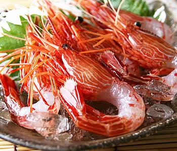 貴重な日本海シマエビ