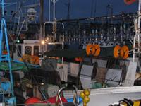 船にはたくさんの電球がついています。