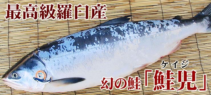 幻の魚 鮭児(ケイジ)と時知不(ときしらず:時鮭)