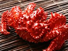 「蟹の匠」茹で上げ花咲ガニ