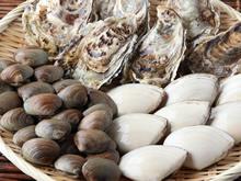 厚岸中嶋孝志さんの特大殻付牡蠣