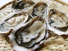 純厚岸産シングルシード牡蠣「カキえもん」