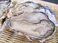 厚岸中嶋さんの殻付牡蠣