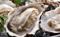 特大「殻付牡蠣」