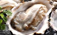 厚岸中島孝志さんの「殻付牡蠣」