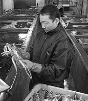 蟹のプロが厳選した本タラバガニです。
