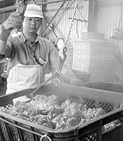 職人が本タラバガニの甘さを最大限に引き出す絶妙な塩加減で茹で上げます。